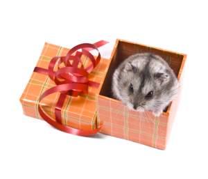 Warum sind Tiere kein gutes Weihnachtsgeschenk?